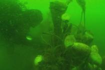 WWF planuje akcję usuwania zalegających sieci z Bałtyku!