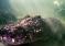 Zaglądając w paszczę prehistorycznej bestii – video