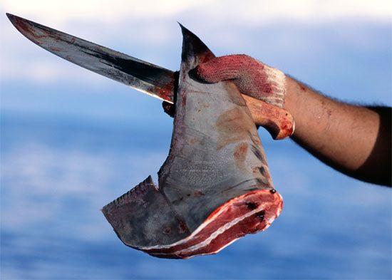 zabijanie rekinów