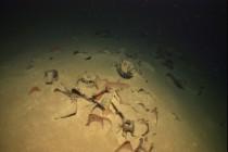 W morskich głębinach odnaleziono antyczne wraki