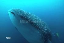 """""""Life in the Blue"""" – w obiektywie BBC"""