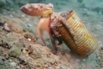 Wpływ człowieka na podwodny świat