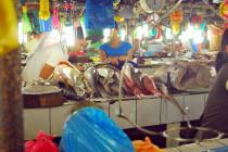 Zakaz handlu rekinią płetwą w Kalifornii