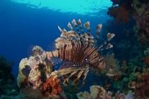 Podwodna dżungla Morza Czerwonego