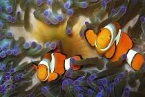 Australia zamierza utworzyć największy rezerwat morski na świecie