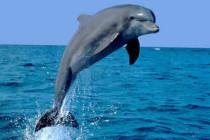 Delfiny i dekompresja. Nie jesteśmy jedyni?