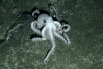 Nowe gatunki odkryte w Antarktyce