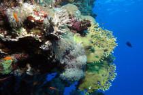 Odkryto pierwszą rafę koralową żyjącą w zimnych wodach u wybrzeży Mauretanii!
