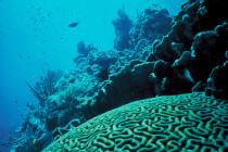W Whipsnade Zoo zamrażają rafę koralową