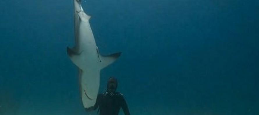 Oblicza natury – nurkowanie z rekinami
