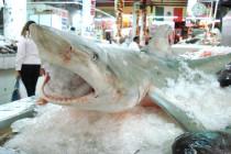 Spotkanie Kalifornijskiej Akademii Nauk o ochronie rekinów.