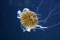 Morskie gatunki są zagrożone wyginięciem!