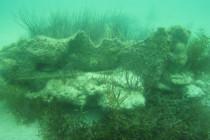 Nowy zabytek podwodnej Florydy