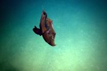 Wampirzyca piekielna sfilmowana w Zatoce Meksykańskiej