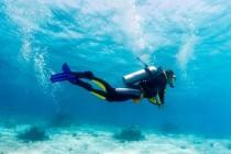 Wyjazdy szkoleniowe i rekreacyjne w nurkowaniu i nie tylko. Biuro podróży dla nurków.