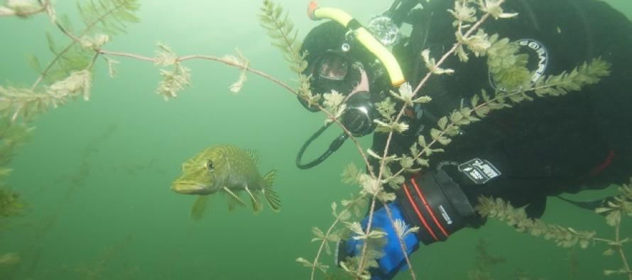 Jezioro Płotki – nurkowanie jak w akwarium!