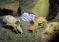Madagaskar: odkryto olbrzymie podwodne cmentarzysko lemurów sprzed 1000 lat – video