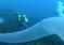 Australia: niezwykłe podwodne stworzenie sfilmowane przez płetwonurków – video