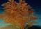 Nowo odkryty koralowiec może mieć nawet 4000 lat!