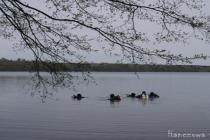 Legalnie czy nielegalnie? Czyli o nurkowaniu w jeziorze Hańcza!