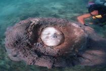 Niesamowita podwodna rzeźba ludzkich twarzy z Ko Tao