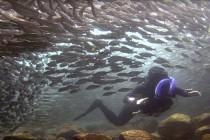 Galapagos – miejsce zapomniane przez czas – video