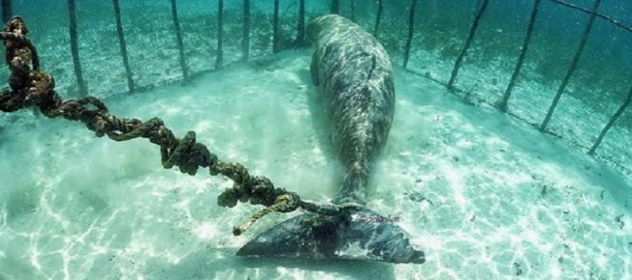 Więził zagrożone wyginięciem zwierzęta pod wodą i pokazywał turystom