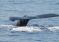 """Wojciech Zgoła – """"Moje Hawaje"""": Wieloryby, nurkowanie i samolot – relacja + galeria"""