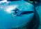 Dzięki własnemu śledztwu aktywiści uratowali dwa rekiny wielorybie!
