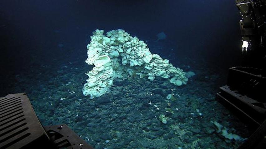 sea-sponge