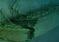 """Wrak HMHS """"Britannic"""" może zostać zamieniony w park dla nurków"""