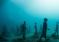 Museo Atlántico –  niesamowita atrakcja dla nurków! – video