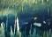 Niesamowity Labirynt Fauna na Wyspach Bahama – video