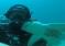 Od 7 lat kiedy idzie nurkować, rekin pojawia się by go przytulić…