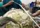 Lekarze usunęli niemal 1000 monet z żołądka żółwia zielonego! – video