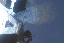 Aligator zaatakował nurka !