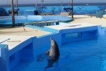 Jak bardzo kochasz delfiny ?