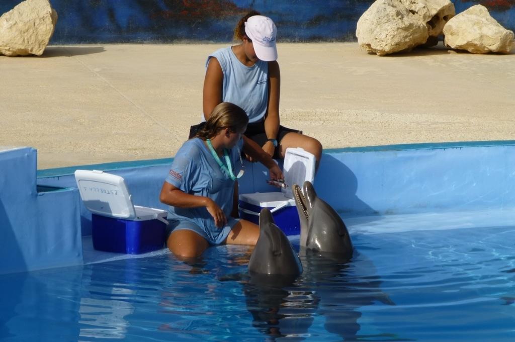 Nie dla delfinariow