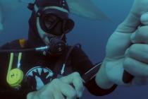 Nurek otoczony rekinami celowo zranił się nożem! – video