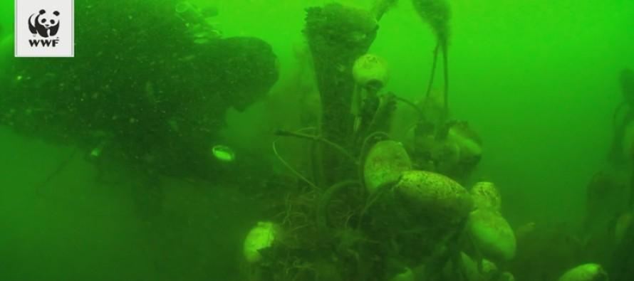 Na Bałtyku ruszyła akcja wyciągania zagubionych sieci rybackich