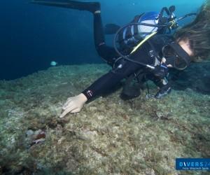 Dive On Malta –  Dobry Wybór!