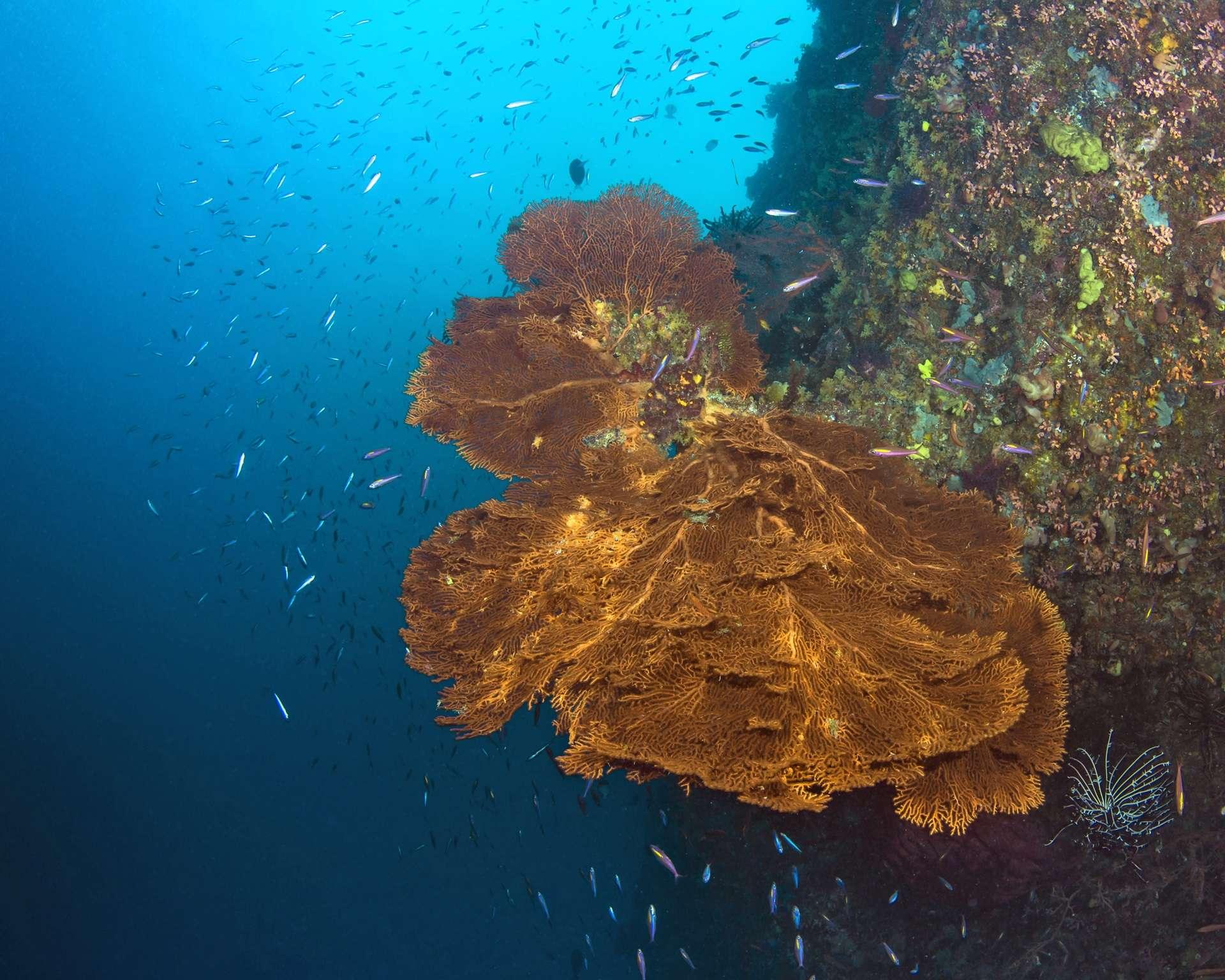 rafa koralowa chiny divers24.pl