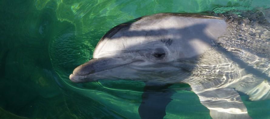 Fakty i mity delfinoterapii