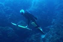 Skoki narciarskie pod wodą? Czemu nie! – video