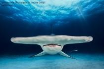 Polak zajął 2 miejsce w prestiżowym konkursie Under Water Photography
