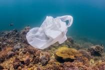 Szkodliwy wpływ plastiku na rafy koralowe