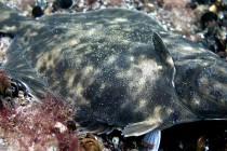 Pierwszy endemiczny gatunek w Morzu Bałtyckim