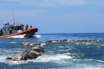 300 martwych żółwi znaleziono na meksykańskim wybrzeżu!