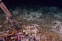 Naukowcy odkryli olbrzymią głębinową rafę koralową – video