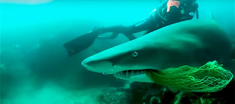 Nurek uratował rekina przed bolesną śmiercią – video